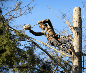 Man with chainsaw cutting branches on tree